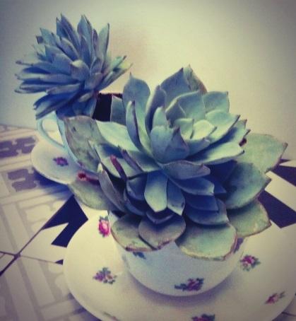 plante grasse echeveria dans sa petite tasse fleurie. Black Bedroom Furniture Sets. Home Design Ideas