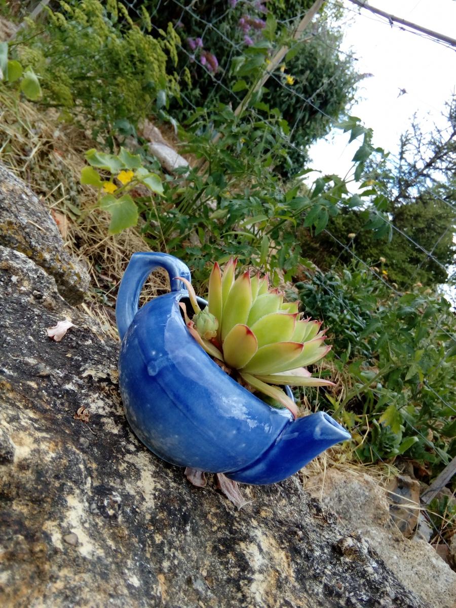Joubarbe en théière, création végétale par recyclage ...