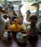 collection oies et canards
