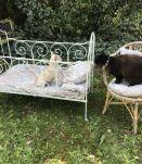 Ancien lit de bébé en fer forgé vert pale début XXème