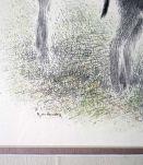Dessin à la plume Deux ânes