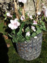 Composition florale · Tulipier - Fleurs et feuillages