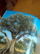 "Livre "" L'huile d'olive """