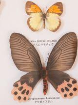 Papillons encadrés