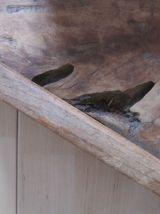 XIXe siècle Planche à Découper en bois, planche  Poissonnier