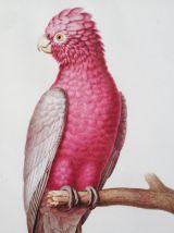 Cadre ornithologique cacatoès