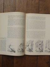 Le Monde Vivant Les Oiseaux- Roger Tory Peterson- Collection