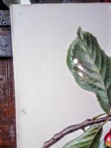 """Belle impression Carlos von riefel pinx - """"Prunus Avium"""""""