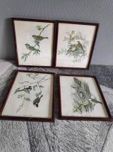 Lithographies d'oiseaux signées J. Gould
