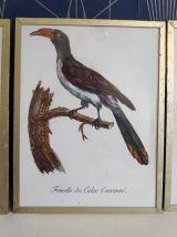 cadres lithographies oiseaux cadre doré