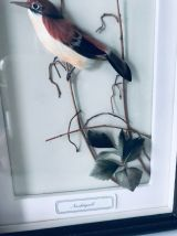 Cadre vitrine oiseau