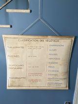 Affiche scolaire Rossignol numéro 11 les plantes vintage