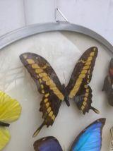 Cadre bombé papillon vintage