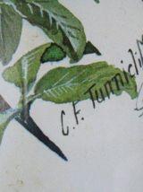 Lot 3 reproductions aquarelles C-F. TUNNICLIFFE