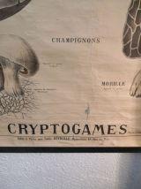 Carte deyrolle numéro 53 cryptogames