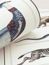 Chimère - gravure lithographie - le zèbrodile