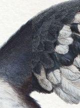 Chimères - gravure lithographie - lot de 3