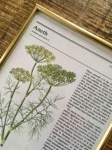Lot 3 illustrations botanique vintage cadres dorés 3