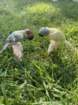 Couple de perroquet en pierres