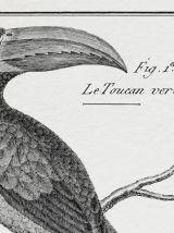 Lithographie gravure oiseaux vintage format A4