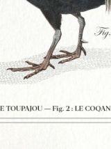 Chimère - gravure lithographie - le tapajou et le coqandérou