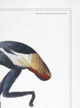 Chimère - gravure lithographie - le mirilion et l'oitèle roy