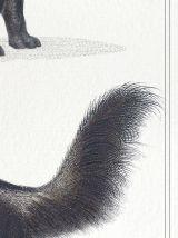 Chimère - gravure lithographie - le toucéros et le fourmipha