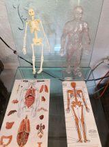 Puzzle anatomique 3d année 50