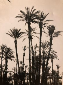 Photo vintage La Palmeraie de Marrakech