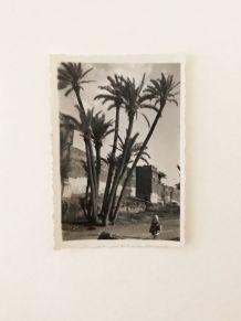 Photo vintage Palmeraie de Marrakech 50's