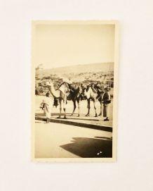 Carte postale ancienne avant 40 Maroc chameaux