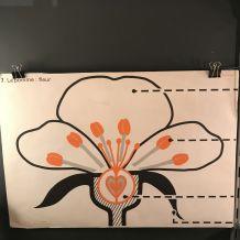 """Affiche scolaire ROSSIGNOL - Croquis Géants """"les plantes"""""""