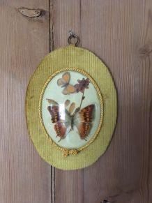 Cadre vintage de deux papillons naturalisés.