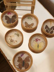 Dessous de verre rotin papillons naturalisés