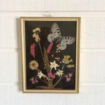 Cadre papillon herbier