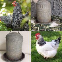 Ancien abreuvoir à poules, décoration de jardin