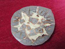 Tranche d'ammonite cristalisée et polie