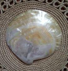 Magnifique coquillage en nacre