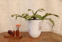 Porte piques à escargot en bois sculpté (vintage)