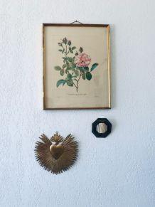 Gravure Redouté ancienne, lithographie botanique Rosier