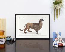 Chimère - gravure lithographie - l'alpalion