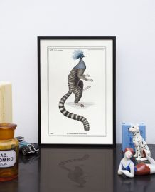 Chimère - gravure lithographie - le ouistigeon