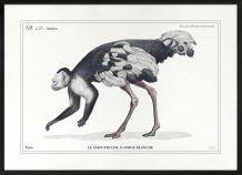 Chimères - gravure lithographie - lot de 2