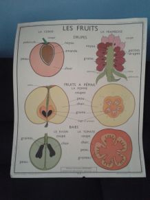 Illustration scolaire les fruits