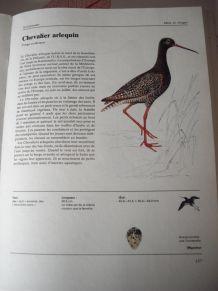 Oiseaux des pays d'europe