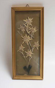 cadre fleurs séchées