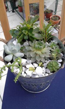 Compositions plantes grasses dans un seau en zinc