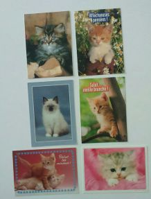 Lot de cartes postales chats