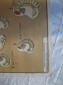 Affiche pédagogique scolaire Rossignol école