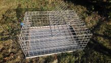 cage transport volaille